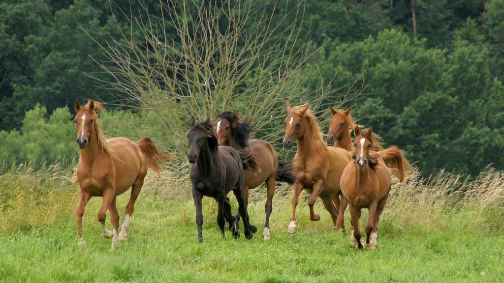 MycoHorse: Nahrungsergänzung fürs Pferd